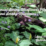 2017 Spring Wildflower Pilgrimage in Great Smoky Mountains set for April 11-15, 2017 in Gatlinburg | May We See in Spring New Shades of Green We've Never Seen Before!