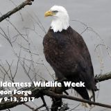 Wilderness Wildlife Week 2017 at LeConte Center in Pigeon Forge May 9th-13th