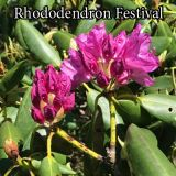 The Annual Roan Mountain Rhododendron Festival