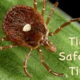 Tick Safety Tips!