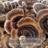 Smoky Mountain Turkey Tail Mushrooms