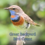Great Backyard Bird Count Event