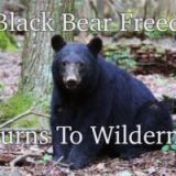 Healthy Black Bear Returns Home.