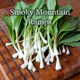 Smoky Mountain Ramp Pesto Recipe