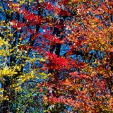 Great Smoky Mountains Fantastic Fall Foliage Forecasted