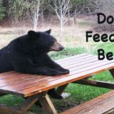 Don't Feed The Bears Event