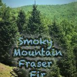Smoky Mountain Fraser Fir Trees, America's Favorite Christmas Tree