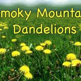 Smoky Mountain Dandelions