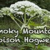 Smoky Mountain Poisonous Plants