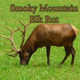 Smoky Mountain Elk Rut