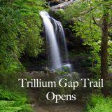 Trillium Gap Trail Opens