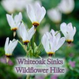Whiteoak Sink Wildlflower Hike