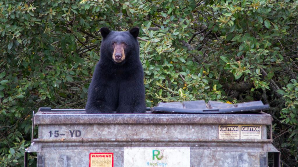 Bears In The Smoky Mountains Active Heysmokies