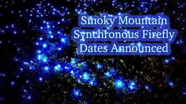 Smoky Mountain Synchronous Firefly Dates Announced